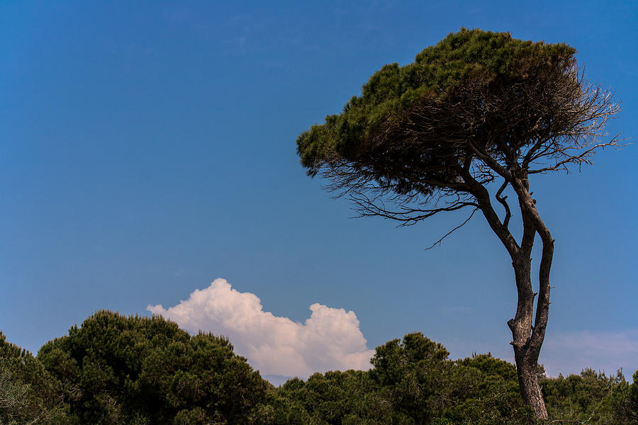 Cloud Photograph - Trees by Daniel Kulinski