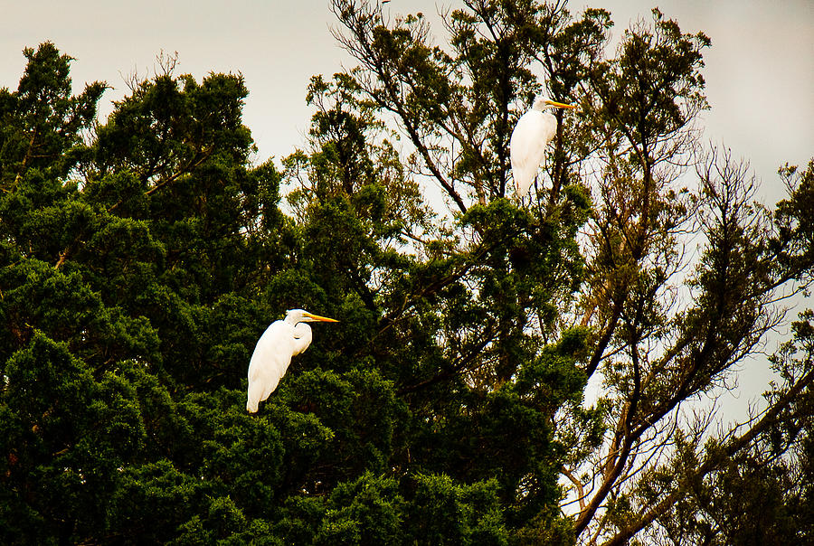 Birds Photograph - Untitled by Michael Ray