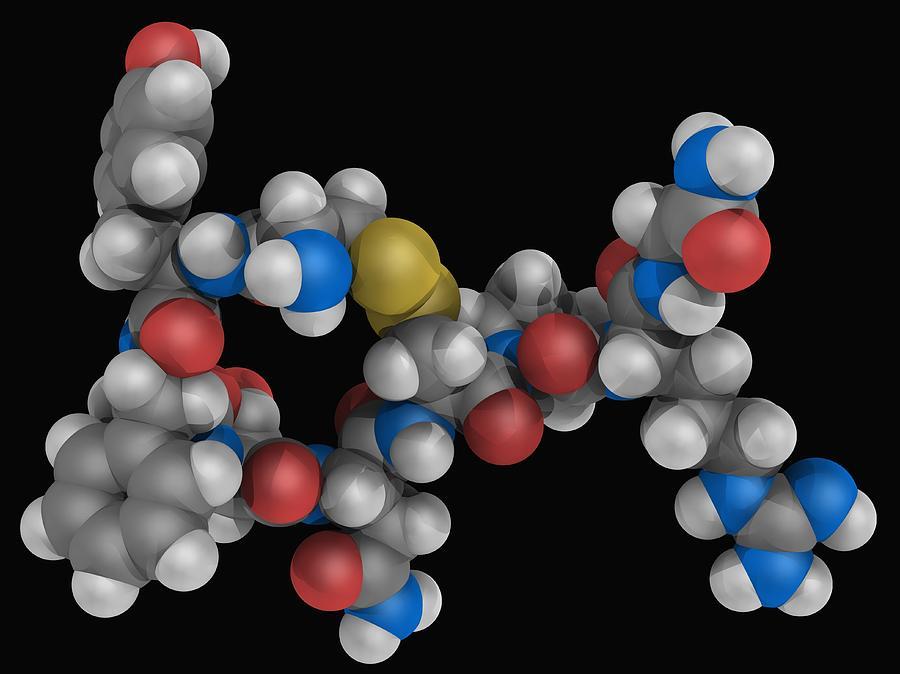 Vasopressin Hormone Molecule Digital Art by Laguna Design