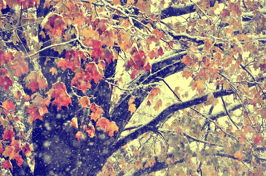 Winter Photograph - Winter Autumn Snows by JAMART Photography