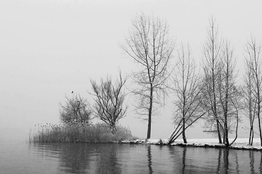 Travel Photograph - Wintertrees by Joana Kruse