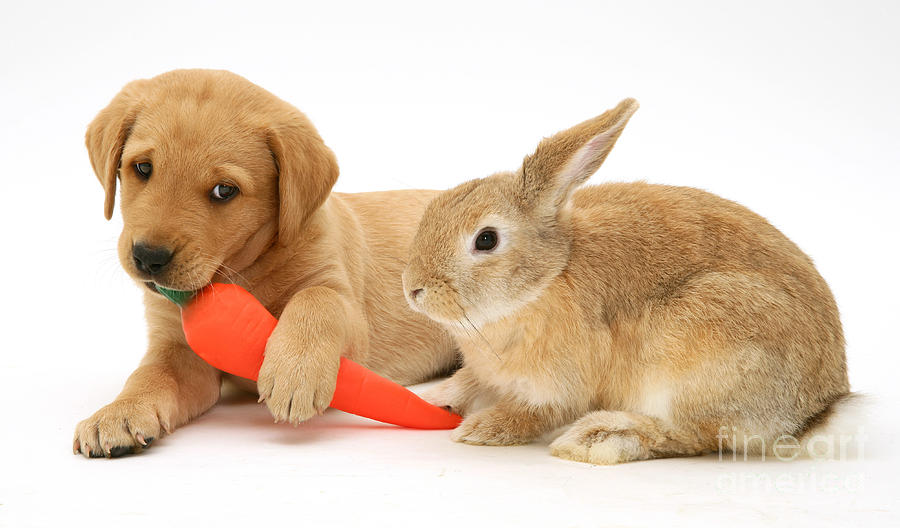 Rabbit And Puppy Photograph By Jane Burton