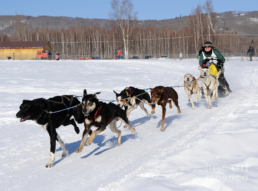 Sled Photograph - 2010 Limited North American Sled Dog Race by Gary Whitton
