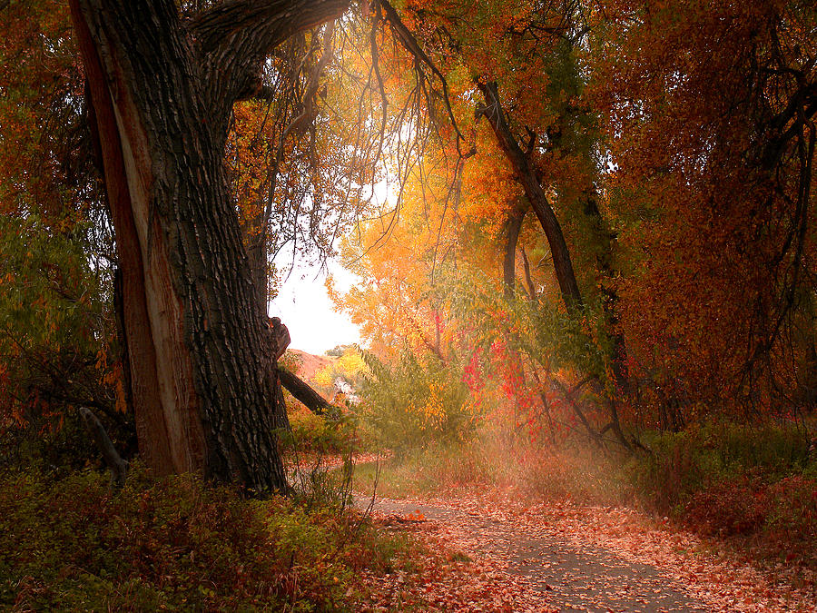 Path Photograph - 2194 by Peter Holme III