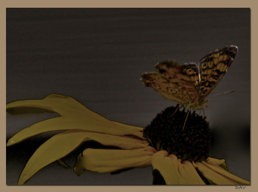 Flutter Of Nature Photograph - Butterfly Collection by Debra     Vatalaro