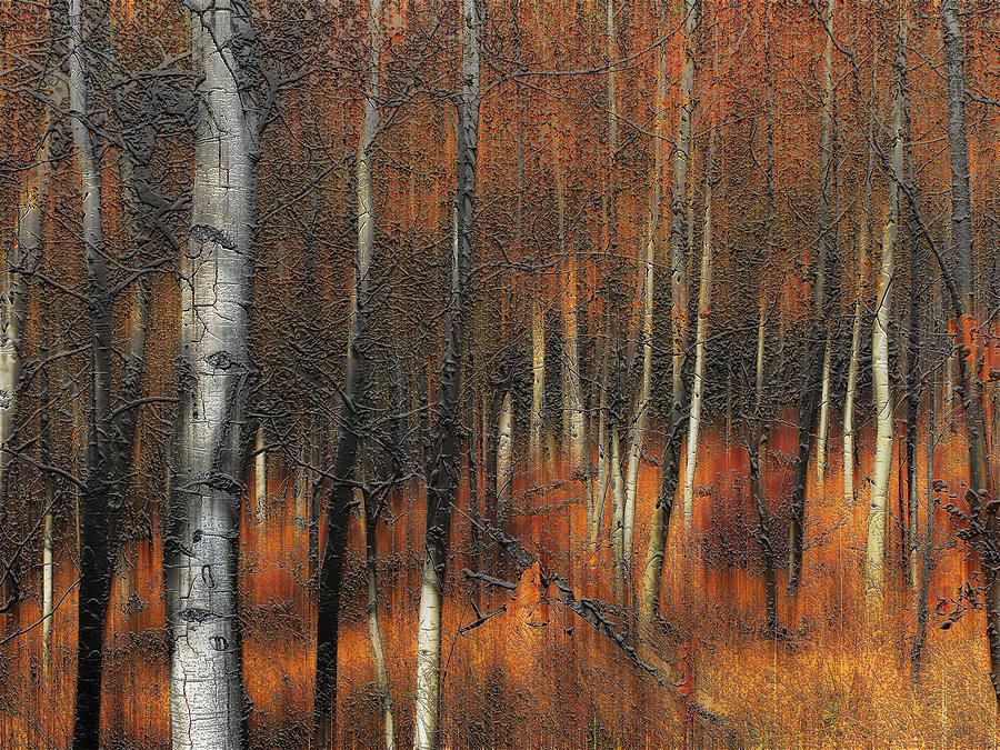 Trees Photograph - 2385 by Peter Holme III