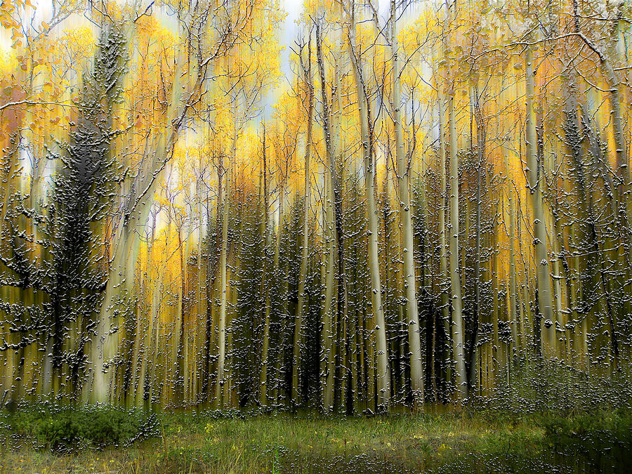 Trees Photograph - 2399 by Peter Holme III