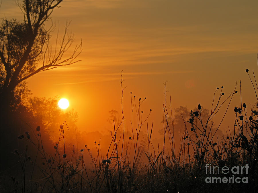 Nature Photograph - Sunset by Odon Czintos