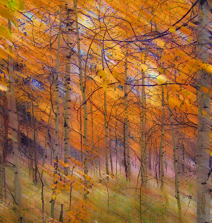 Trees Photograph - 242 by Peter Holme III