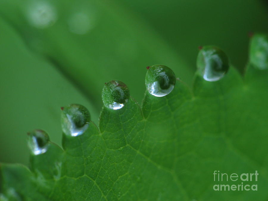 Nature Photograph - Drops by Odon Czintos