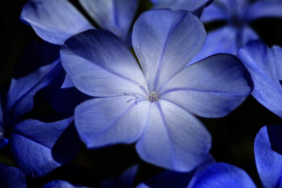 Annual Photograph - Blue by Al Hurley