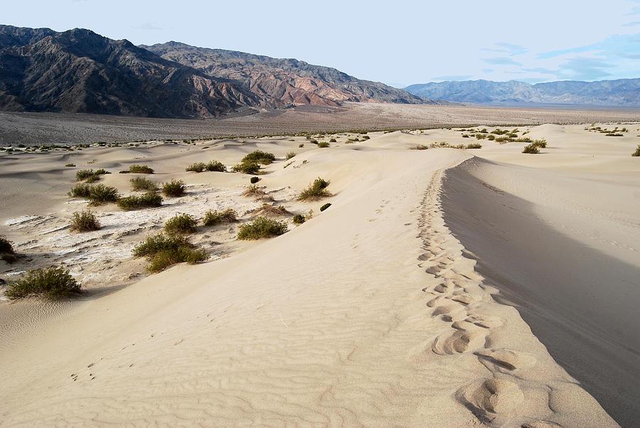 Eva Digital Art - Death Valley National Park Mesquite Flat Sand Dunes by Eva Kaufman