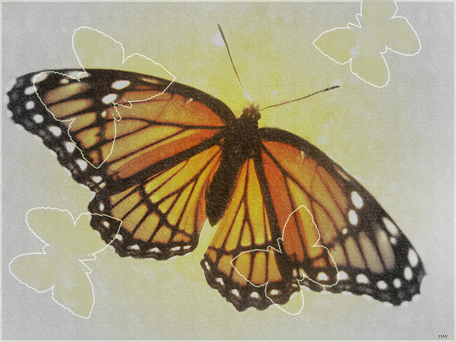 Butterfly Design Collection Photograph - Designer Butterfly Collection by Debra     Vatalaro