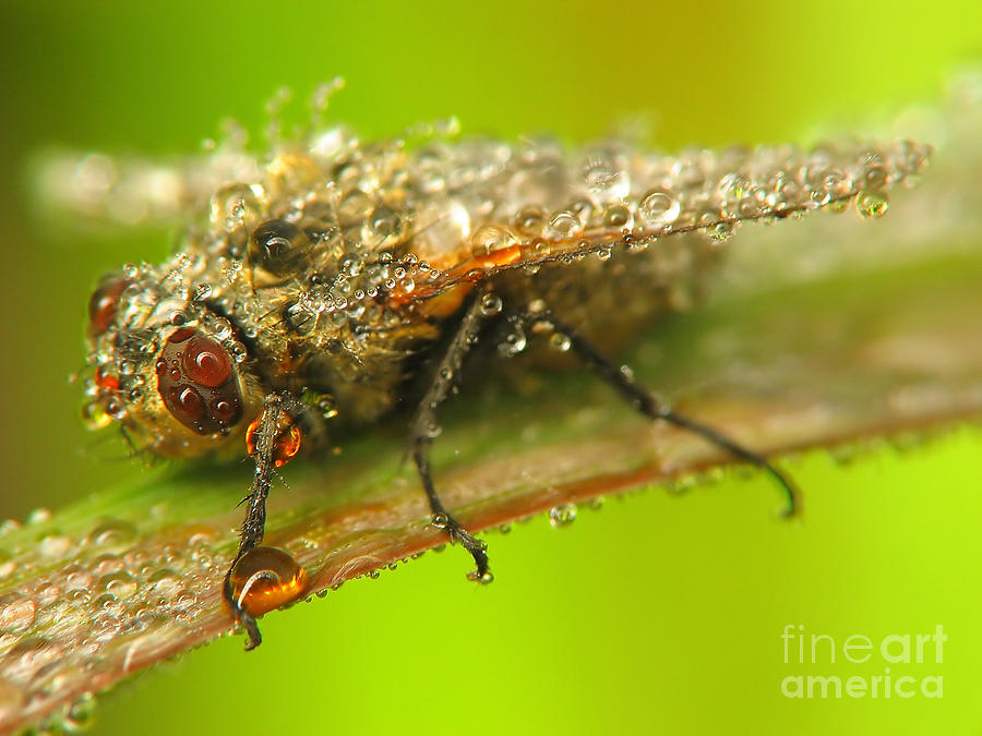 Nature Photograph - Fly by Odon Czintos