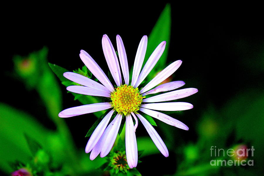 Oregon Wildflowers Photograph - Gardens Of The Soul by Allen Sindlinger