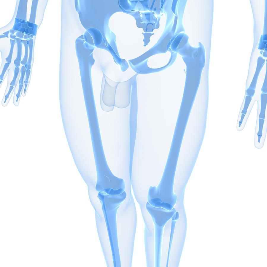 Square Digital Art - Leg Bones, Artwork by Sciepro