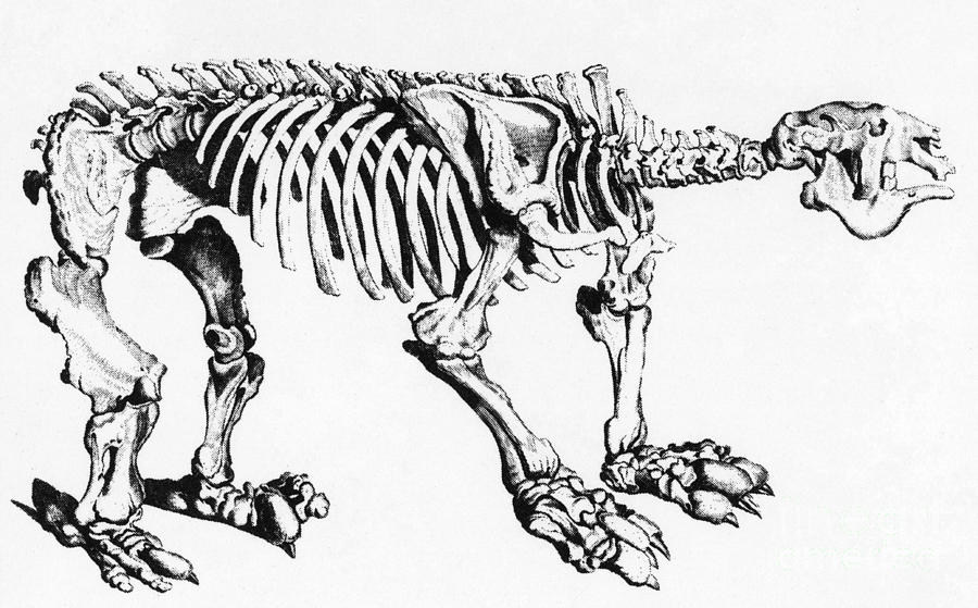 History Photograph - Megatherium, Extinct Ground Sloth by Science Source