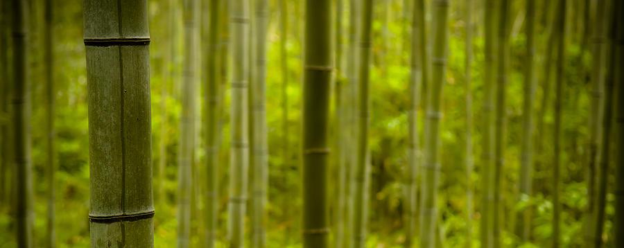 Bamboo Photograph - Mystical Bamboo by Sebastian Musial