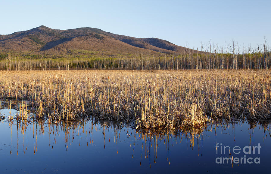 Conservation Photograph - Pondicherry Wildlife Refuge - Jefferson New Hampshire by Erin Paul Donovan