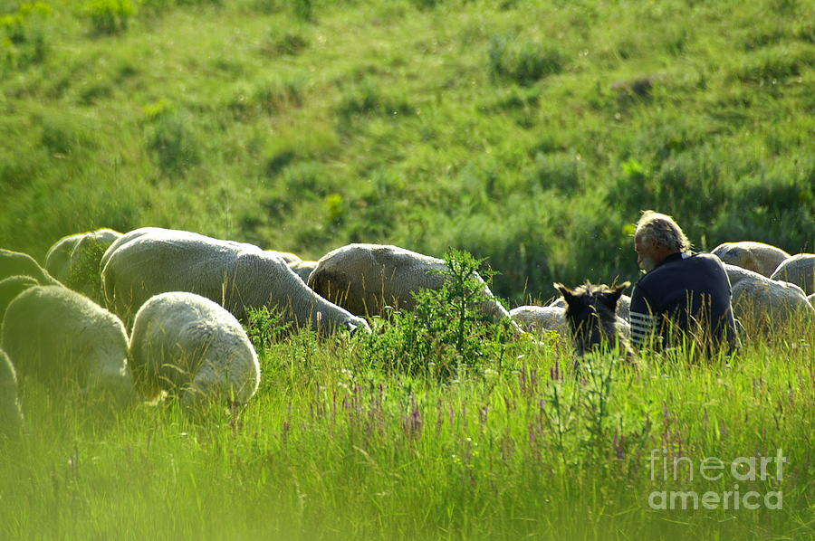 Nature Photograph - Shepherd by Odon Czintos