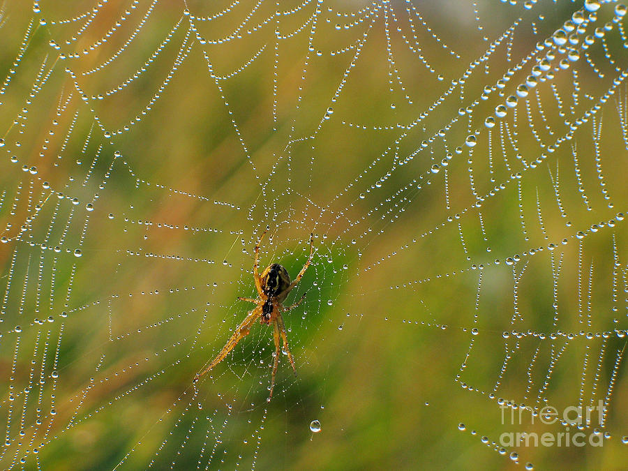 Insects Photograph - Spiderweb by Odon Czintos