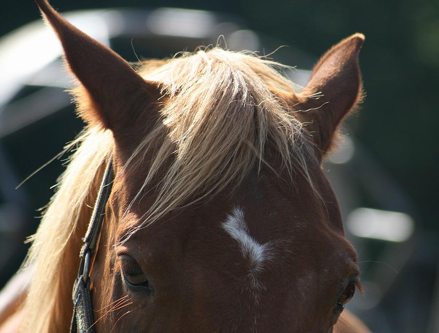 Animals Photograph - The Beauty Of The Horses by Valia Bradshaw