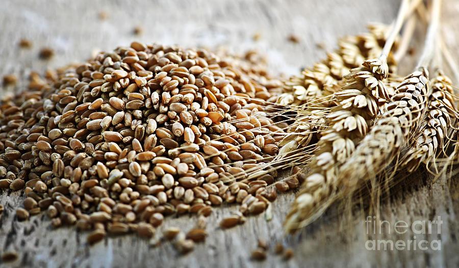 Wheat Photograph - Wheat Ears And Grain by Elena Elisseeva