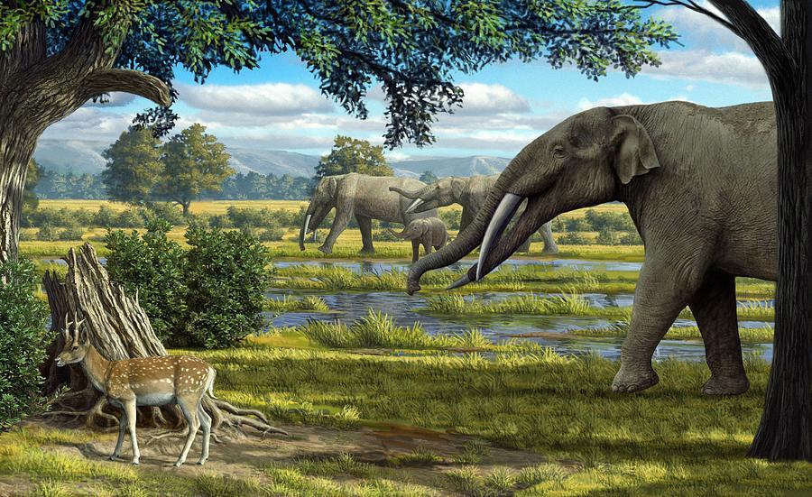 Resultado de imagem para miocene landscape