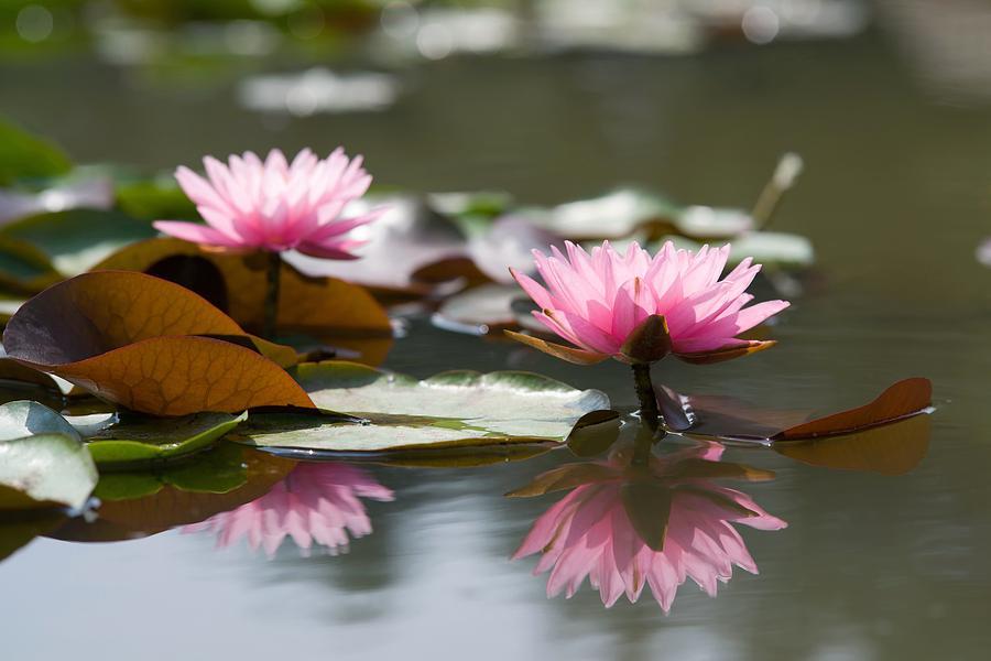 Beautiful Pyrography - Lotus by Tonanakan Khunnaprasertkool