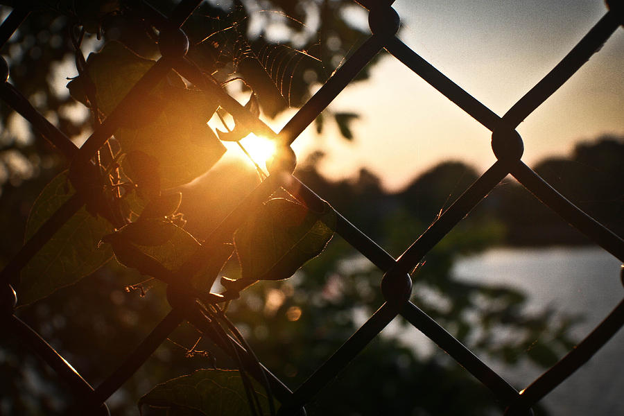Fence Photograph - Untitled by Erin OBrien