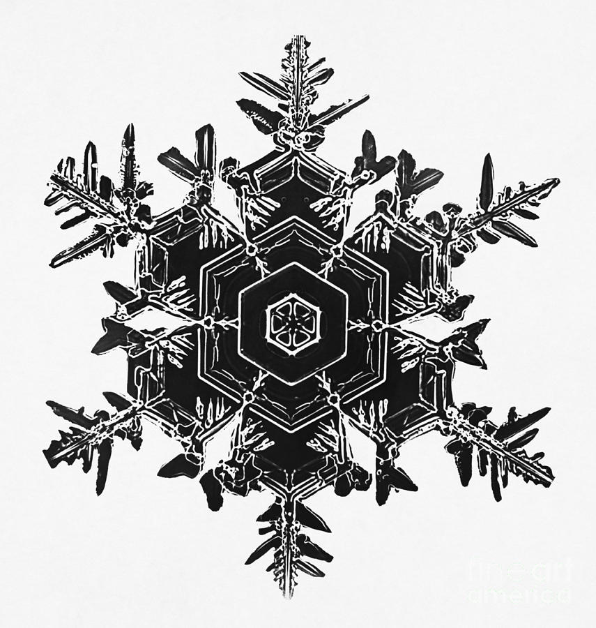 Snowflake Photograph By Science Source