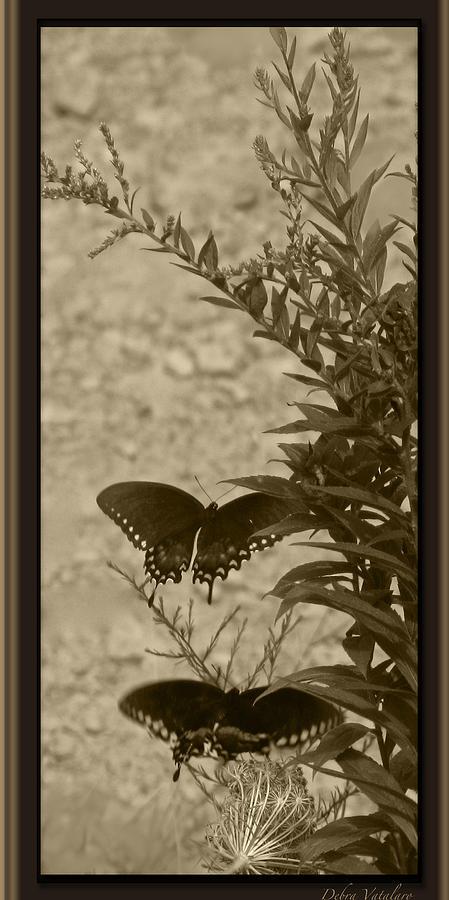 Artist Debra Vatalaro Photograph - Butterfly Collection by Debra     Vatalaro