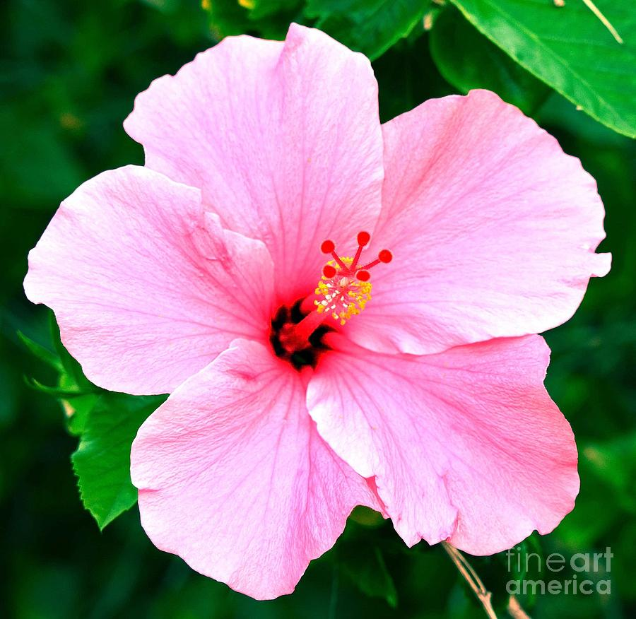 Nature Photograph - Flowers Of The Forest Series  by Terry Troupe