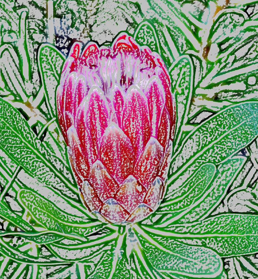 Photoshop Photograph - Protea Blossom by Werner Lehmann