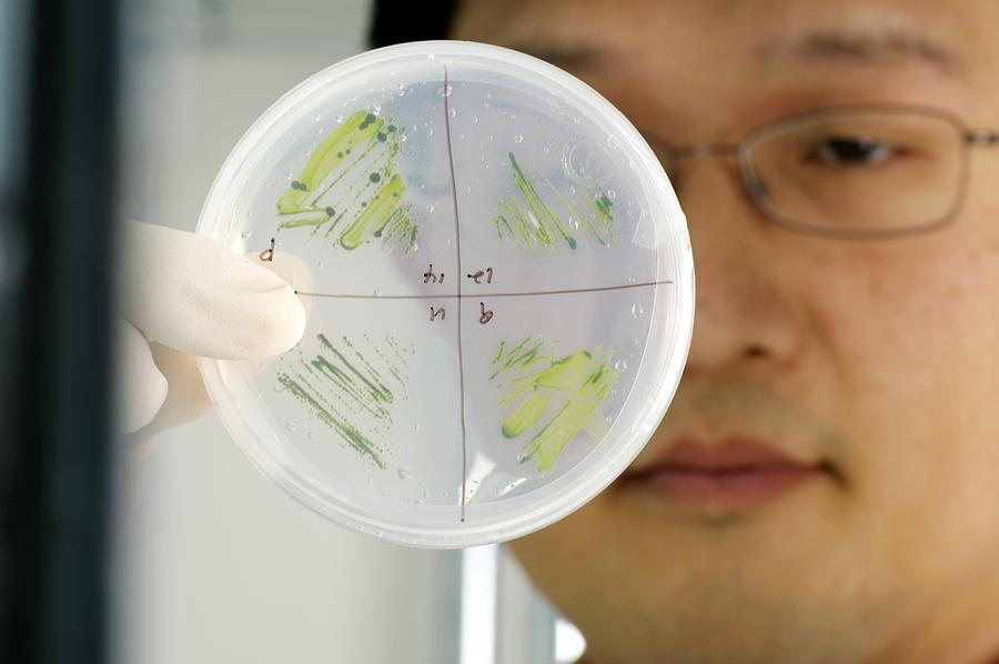 Human Photograph - Algae Research by Volker Steger