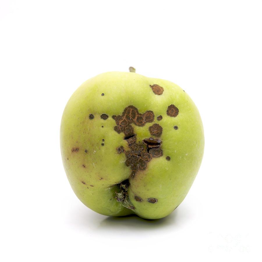 Agriculture Photograph - Apple by Bernard Jaubert