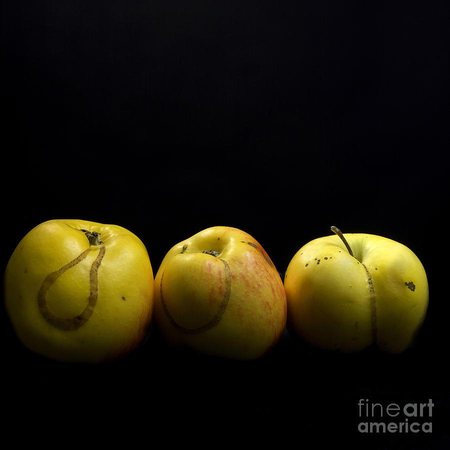 Agriculture Photograph - Apples by Bernard Jaubert