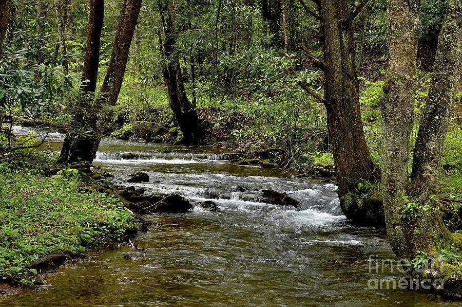 Monongahela National Forest Photograph - Craig Run Monongahela National Forest by Thomas R Fletcher
