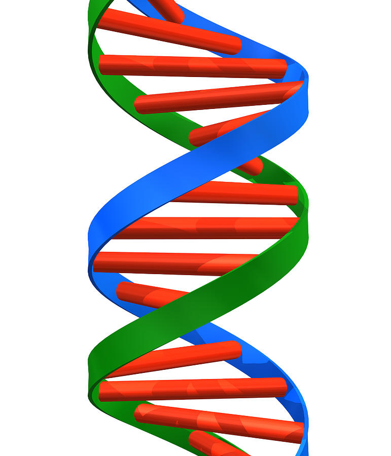 dna helix photograph by roger harris dna clip art public domain dna clip art public domain