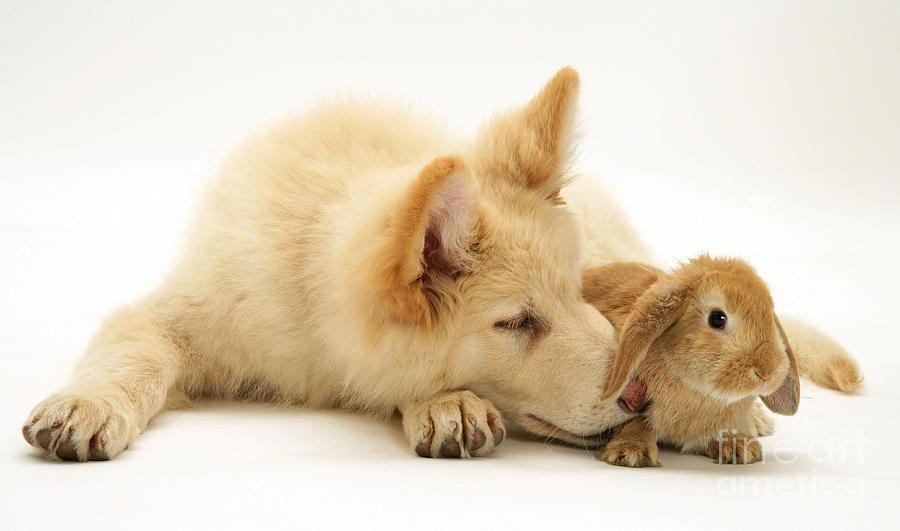 Dog And Rabbit Photograph By Jane Burton