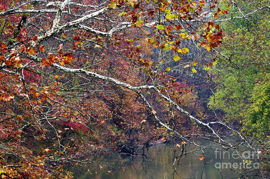 Fall Color Photograph - Fall Along West Fork River by Thomas R Fletcher