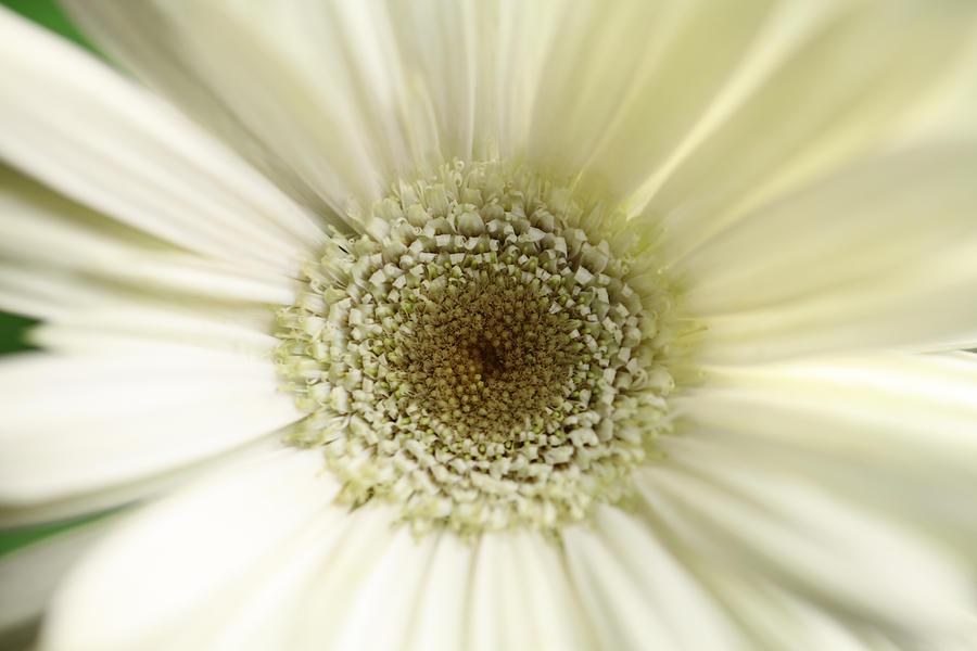 Blume Photograph - Flower by Falko Follert