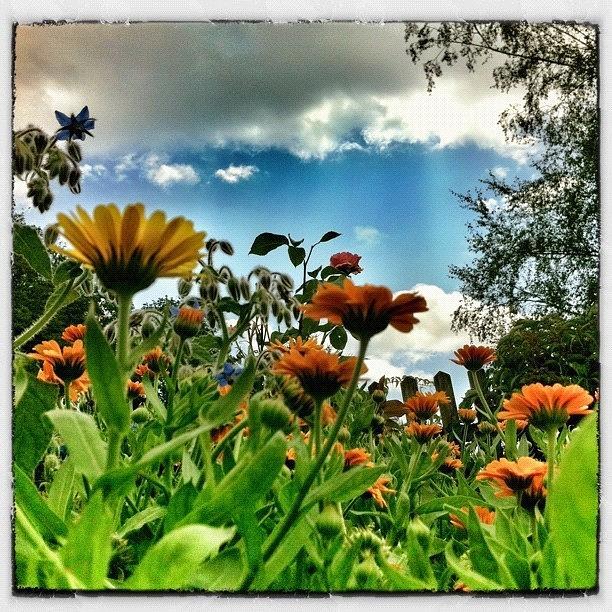 Myswitzerland Photograph - Flowerpower! by Urs Steiner