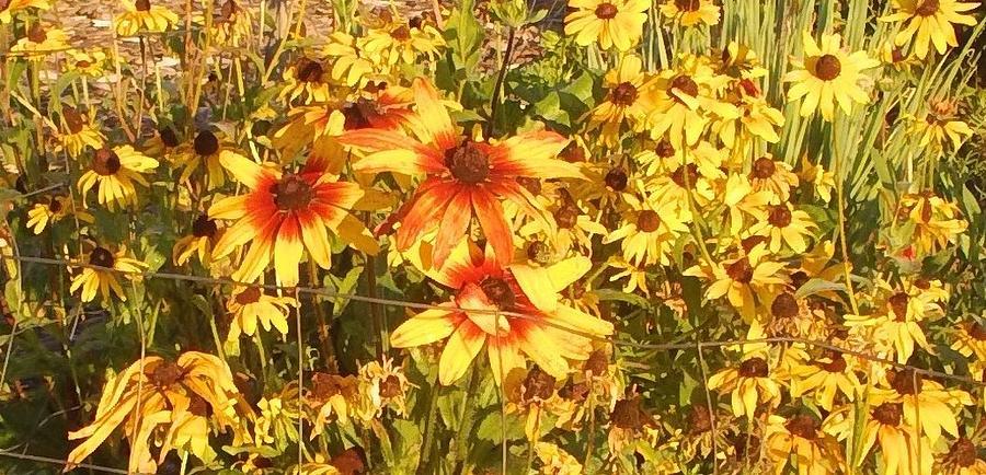 Garden Flowers Photograph - Garden  Flowers  by Thelma Harcum
