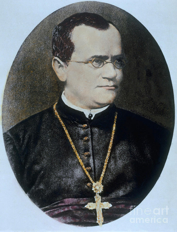 Science Photograph - Gregor Mendel, Father Of Genetics by Science Source