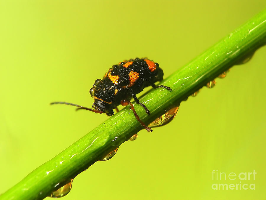 Nature Photograph - Insect by Odon Czintos