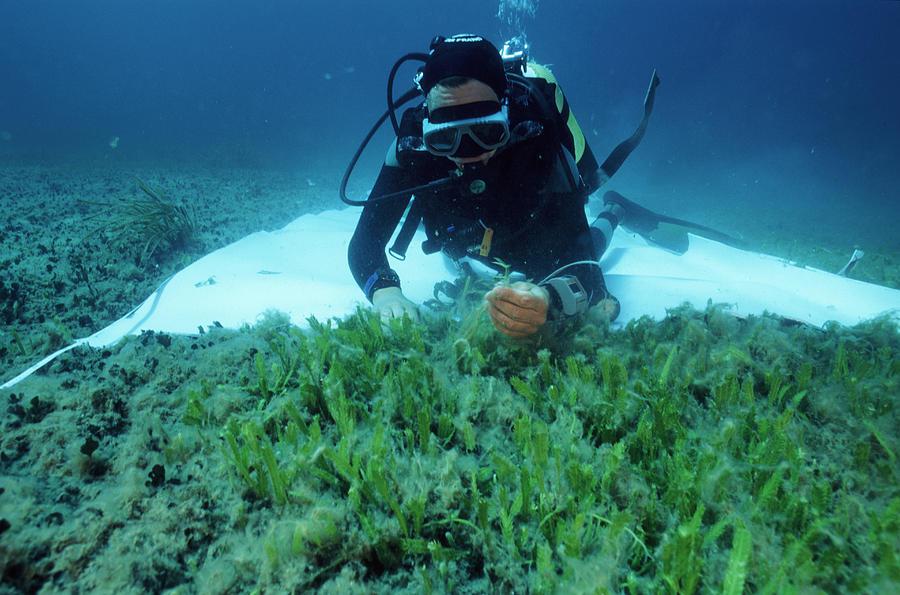 Alga Photograph - Invasive Seaweed Control by Alexis Rosenfeld