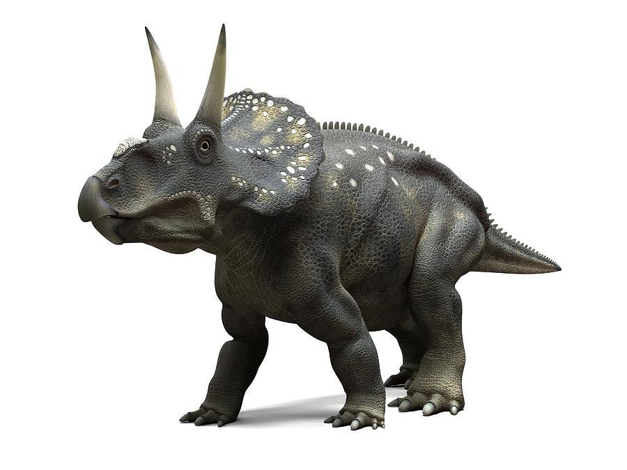 Artwork Photograph - Nedoceratops Dinosaur, Artwork by Sciepro