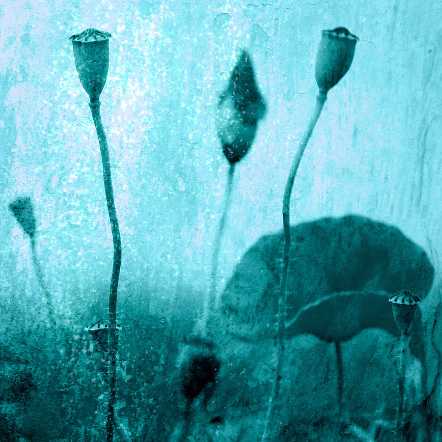 Mohn Photograph - Poppy Art Image by Falko Follert