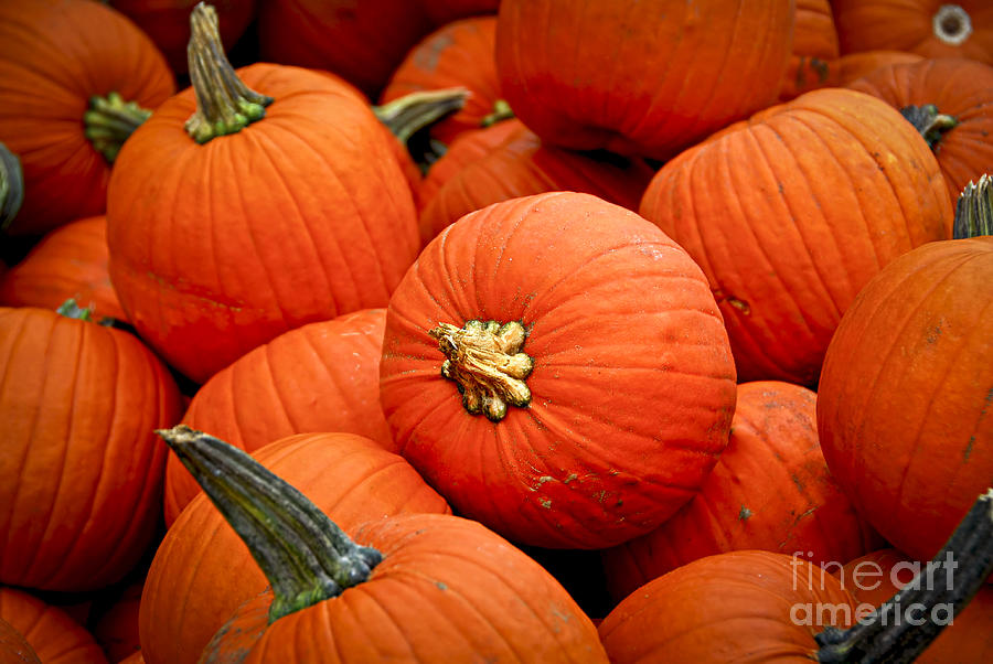Fall Photograph - Pumpkins by Elena Elisseeva